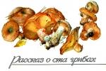 Рассказ о 100 грибах