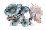 Строфария сине-зеленая