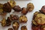 Лесные грибы. Почему натуральные грибы не продают на рынках? Маслята