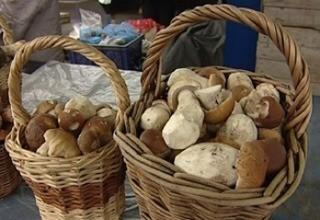 Не надо бояться грибов, нужно просто больше знать о них