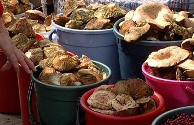 Если же вы не любитель многочасовых походов по лесу, но обожаете «грибочки с жареной картошечкой», можно их просто купить