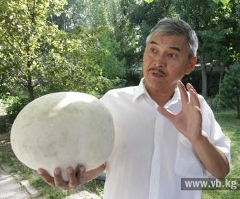 Поначалу я принял этот большущий гриб за камень, лежащий у тропинки, и прошел мимо. А когда поднялся выше по склону горы и еще раз взглянул на него, то подумал: «Что-то для камня он слишком белый!»