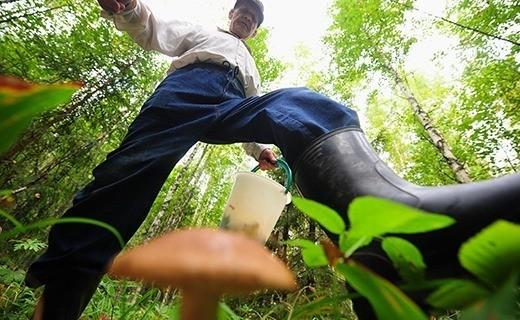Сбор грибов в лесах вокруг Брюсселя - это задача со многими неизвестными.