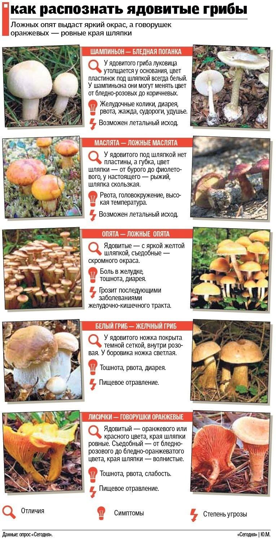 Как распознать ядовитые грибы