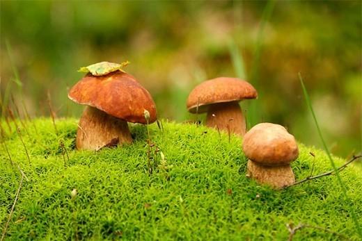"""У некоторых народов Африки считается, что небо и земля произошли от ножки и шляпки гриба, в Таджикистане считали, что грибы - это небесные вши, которые """"Великая мать"""" вытряхнула из халата. Сохранилось также кетский миф о том, что бог Есей посадил мужчин и женщин в землю и те росли одно время, как грибы."""
