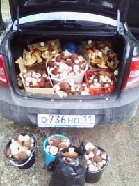 Сыктывкарец, разместивший снимок, пояснил в комментариях, что белые грибы он собрал в Усть-Куломском районе. Дары леса он планирует сдать на одно из пищевых предприятий.