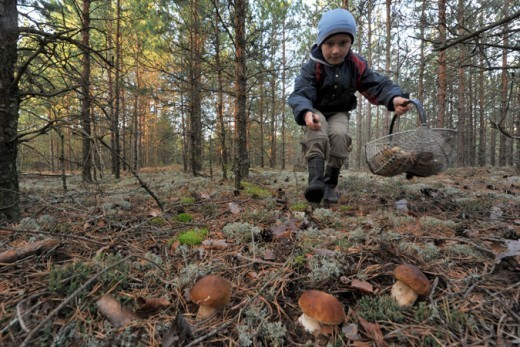 Куда брянцам съездить за грибами