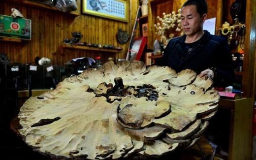 На территории Китая был обнаружен огромный гриб, который имеет название Линчжи, а в простонародии его называют «грибом бессмертия».
