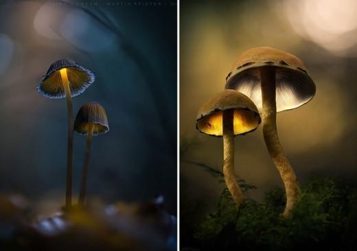 Немецкий фотограф Мартин Пфистер (Martin Pfister). В лесной сказке.