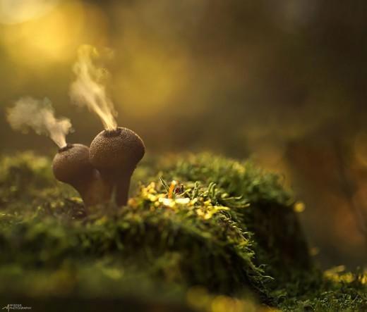 Немецкий фотограф Мартин Пфистер (Martin Pfister). Волшебный свет в лесу.