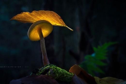 Немецкий фотограф Мартин Пфистер (Martin Pfister). Гриб и осенний листок.
