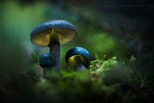 Немецкий фотограф Мартин Пфистер (Martin Pfister). В лесу.