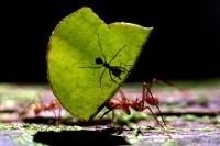Немецкие биологи впервые обнаружили, в каких участках муравейника насекомые оставляют свои экскременты и почему они не выбрасывают их вместе с другими отходами.