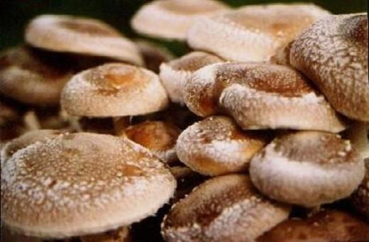 Китайская компания «Shandong Qihe Bio Teсhnology Co Ltd.» намерена реализовать в Шемышейском районе Пензенской области инвестиционный проект строительства комплекса по выращиванию грибов шиитаке.
