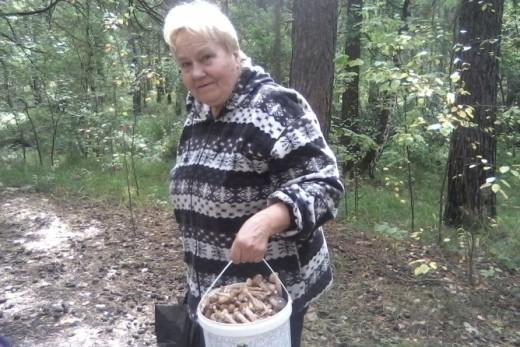 Челябинцев предостерегают от сбора грибов в Шершневском бору