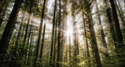 Запрет на посещение лесов снят в Витебской области, сообщили Sputnik в Витебском региональном управлении МЧС.