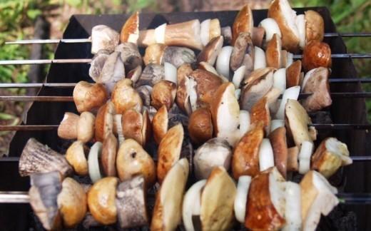Депутат законодательного собрания Ленинградской области Владимир Петров предложил ввести сбор в 500 рублей в квартал (3 месяца) за возможность пожарить шашлыки в лесу.