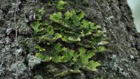 Управление лесами Ленобласти закажет очерки о мхах, водорослях, грибах и лишайниках на 3,4 млн рублей