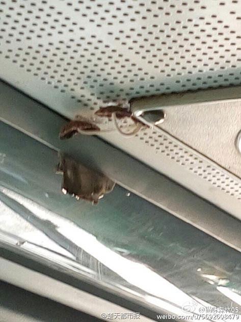 Недавно в городе Ухань, во время поездки на автобусе номер 413, пассажиры заметили на крыше транспортного средства несколько крупных грибов.