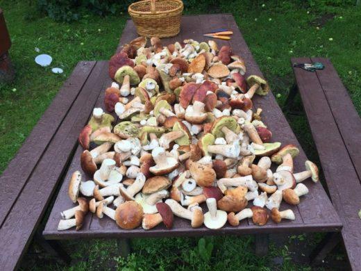 В Московских, Ленинградских, Калужских и Мурманских лесах появились первые грибы. Может быть, нижегородцам тоже пора в лес?