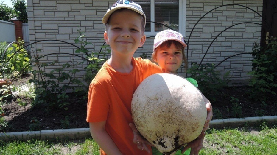 В россошанском селе после ливней вырос гигантский гриб-дождевик