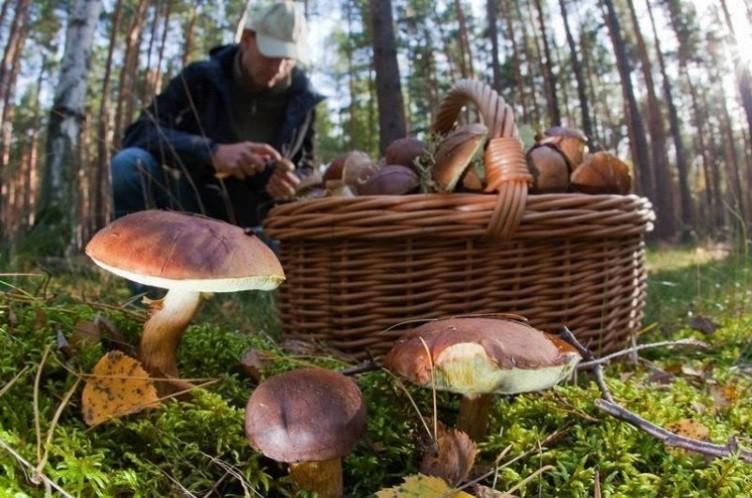 Во Владимирской области появились грибы