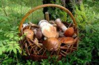 Собираясь в лес «по грибы - по ягоды» нужно постараться просчитать всё до мелочей