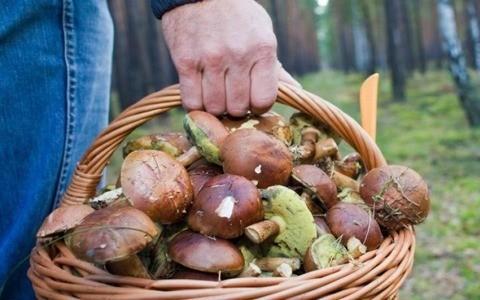 Серпуховский район в числе самых грибных