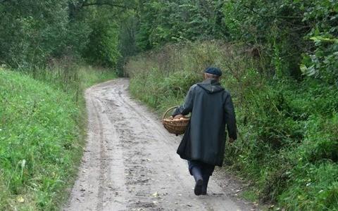 Все чаще люди, уйдя в лес по грибы, не могут найти дорогу домой