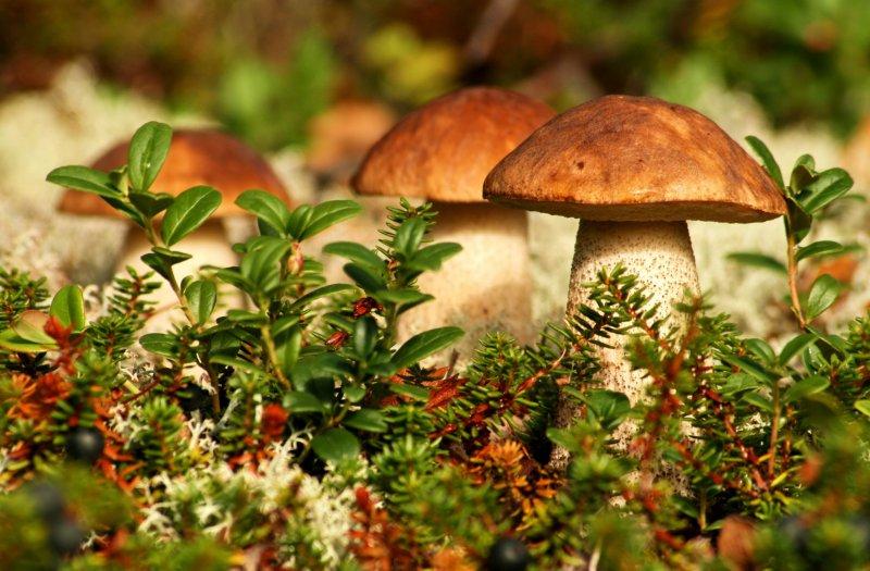 Ученые доказали существование «грибных» дождей