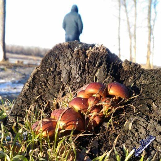 Фото грибной поляны было опубликовано в социальной сети за подписью: «Этим грибам похоже плевать, что сейчас февраль».