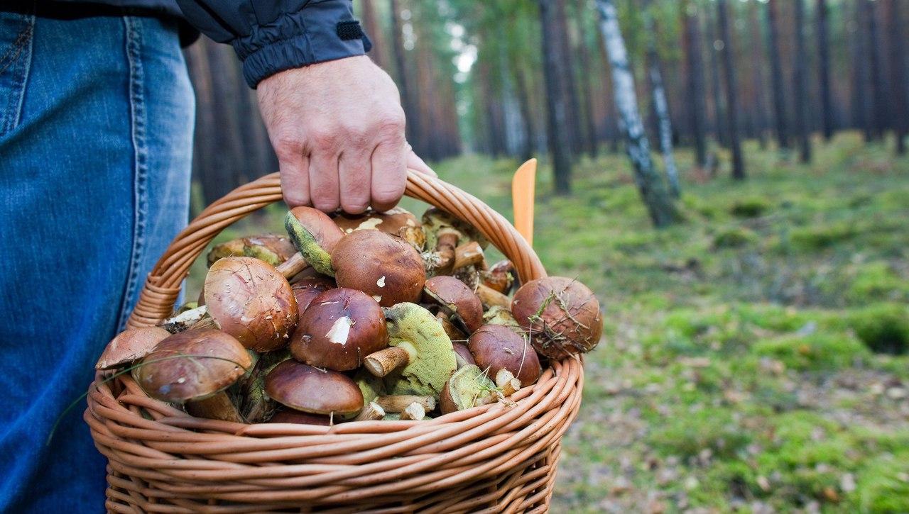 ТОП-5 ядовитых грибов