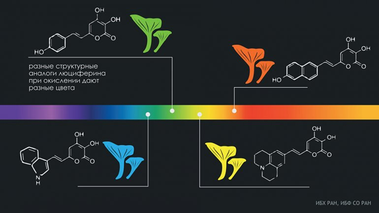 Российские биологи научили грибы сиять всеми цветами радуги
