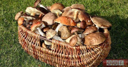Ученые из России рассказали, грибы могут уничтожить человечество. Все дело в спорах, которые проникают в живое существо и паразитируют за счет его.
