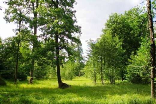 В Нижегородской области введен запрет на посещение леса