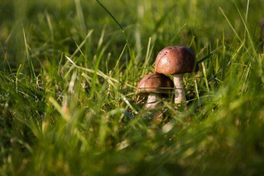 Советы туристам: грибная охота началась