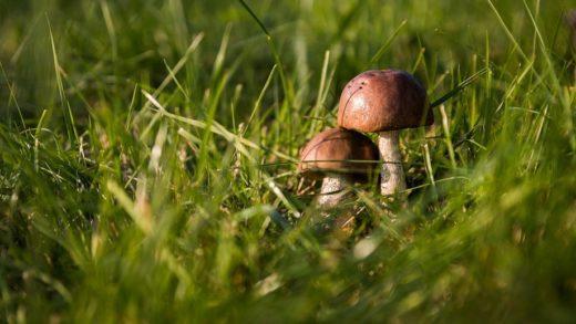 Урожай грибов в Московской области в 2017 году ожидается высоким. Он может превысить прошлогодние показатели благодаря влажной и прохладной погоде