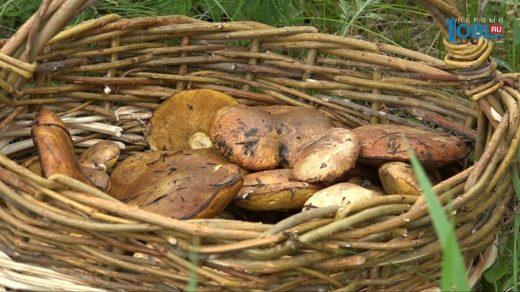 Жители Южного Урала уже несколько недель радуются началу грибного сезона, по мнению грибников, в этом году он наступил раньше.