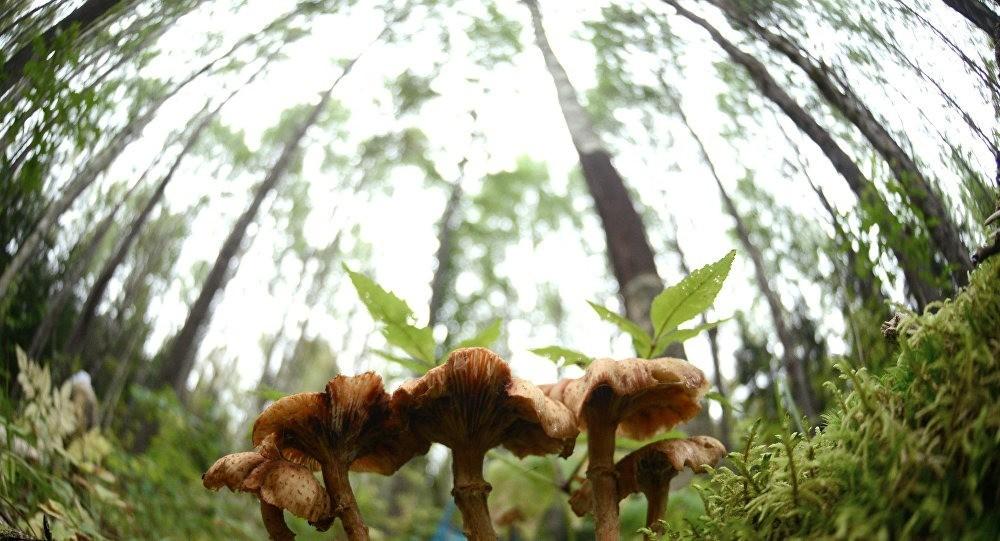 В лес ни ногой: грибников в Молдове ждут большие штрафы