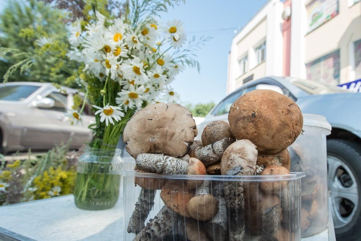 Первые грибы появились в Приамурье раньше срока