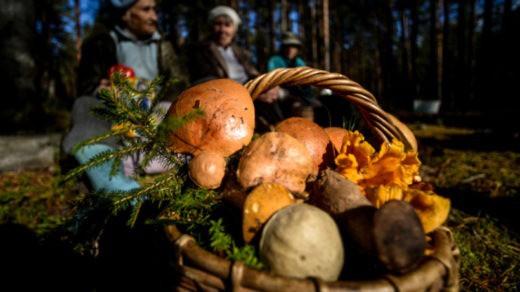 В 2017 году в Подмосковье соберут в 2 раза меньше грибов Фото: © РИА Новости, Константин Чалабов