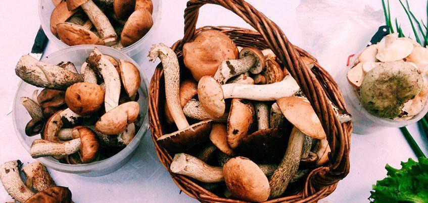 Какие грибы уже можно купить в Ижевске?