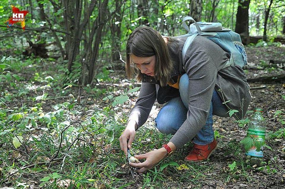 В Ленинградской области пошли первые грибы