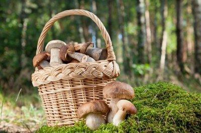 В Московской области большое их разнообразие грибов в августе и сентябре. Это боровики, рыжики, моховики и подберезовики.