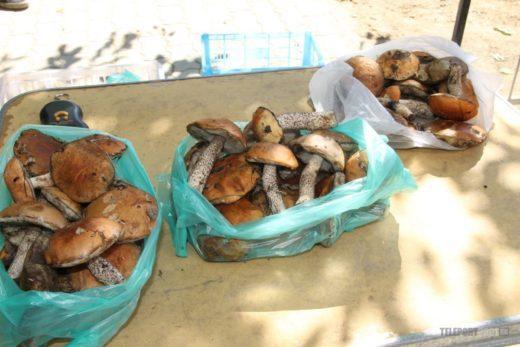 Сезон сбора грибов начался в Приамурье