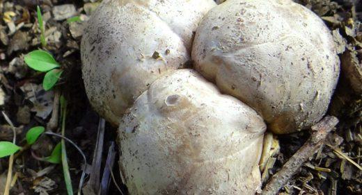 В лесах Латвии началась грибная охота, а с ней появились и первые пострадавшие от необдуманного выезда на природу