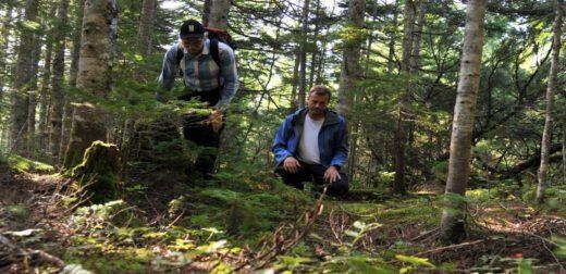 Шведские ученые нашли редкие грибы - мацутакэ на Сахалине