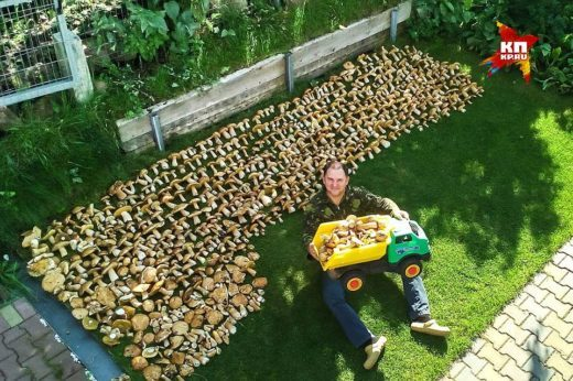Урожай занял целую поляну дома у грибника. Фото: Анатолий Толстихин.
