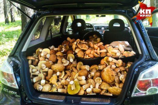 Такого урожая бывалый грибник не припомнит. Фото: Анатолий Толстихин.