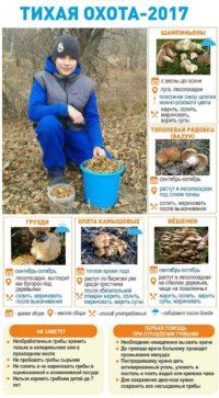 Где и когда можно собирать астраханские грибы: тихая охота началась